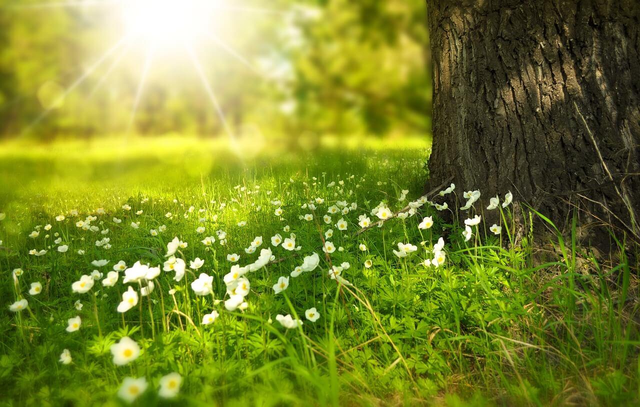 Vuoi migliorare la tua vita? Impara a vivere il presente