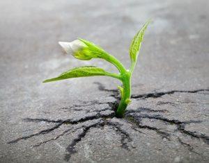 Come migliorare la vita a piccoli passi